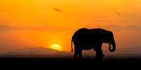 African elephant silhouette against sunset in Amboseli
